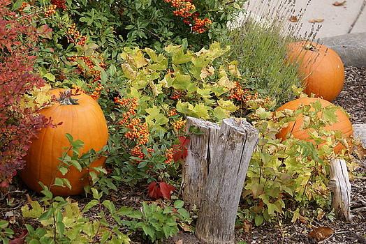 Fall Garden by Cynthia Powell