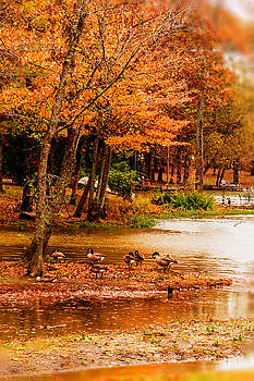 Fall Gathering by Barry Jones