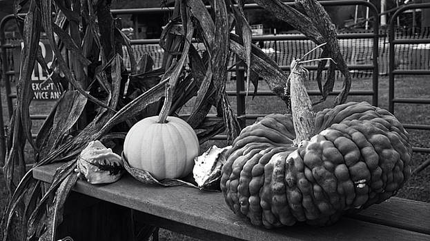 Fall Gourds by George Taylor