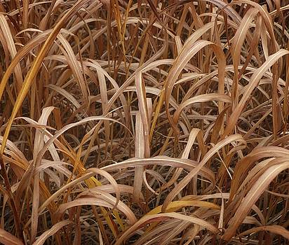 Dee Flouton - Fall Grass