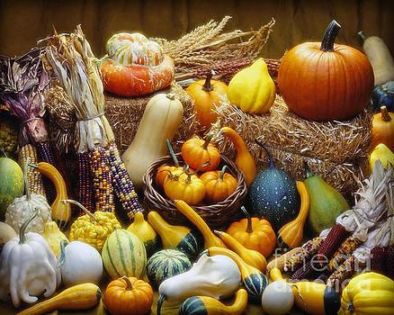 Fall Harvest by Martin Konopacki