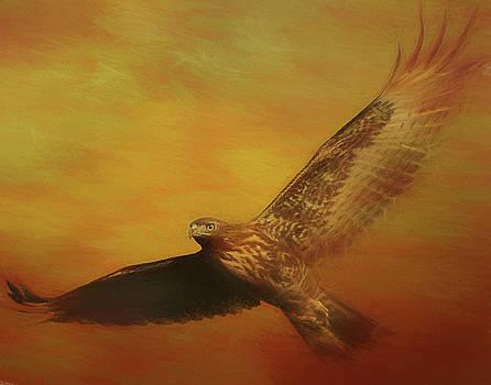 Fall Hawk by Gloria Anderson