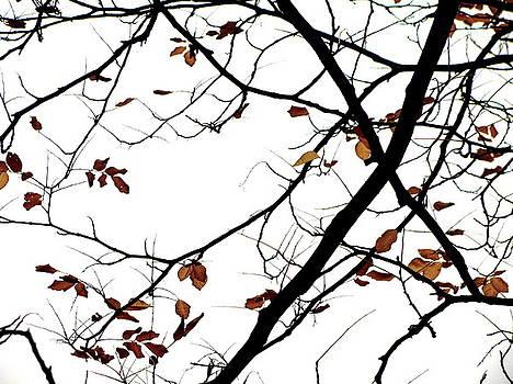 Fall in Brooklyn by Oksana Pelts