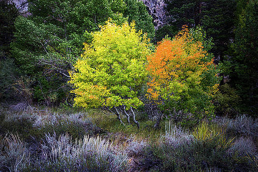 Fall in Mammoth by Davorin Mance