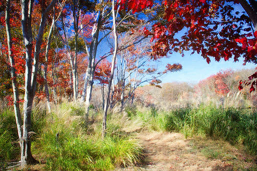 Fall in Red and Green by Vicki Jauron