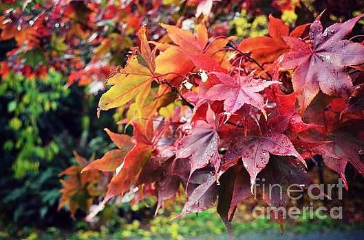 Fall in Seattle by Kiana Carr