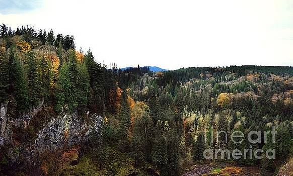 Fall in Snoqualmie by Kiana Carr