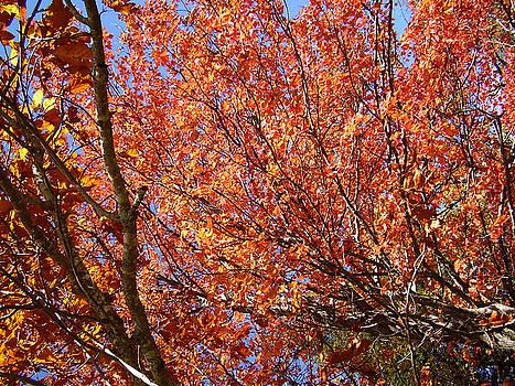 Flavia Westerwelle - Fall in the Blue Ridge Mountains