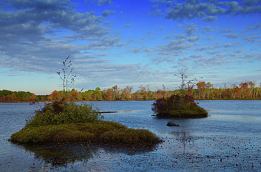 Fall In The Pinelands by Jim Cook