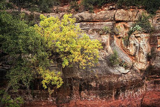 Saija Lehtonen - Fall In The Red Rocks