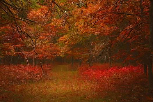 Fall In The Woods by Linda C Johnson