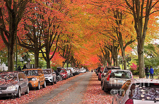 Fall in Vancouver 2017 1 by Maria Janicki
