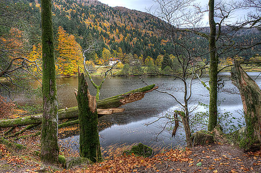 Fall in Vosges National Park by Wim Slootweg