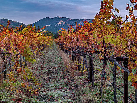 Fall in Wine Country by Bill Gallagher