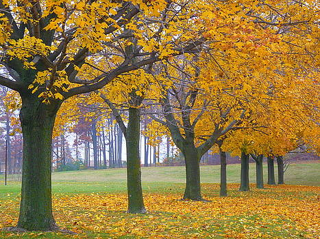 Fall in Yellow by Jan Scholke