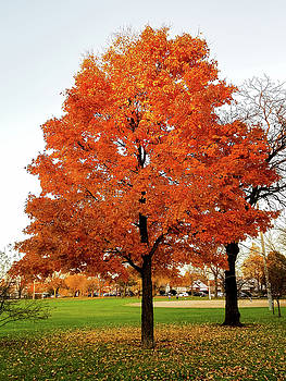 Fall is Coming by Britten Adams
