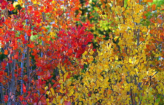 Fall Is In The Air by Fiona Kennard