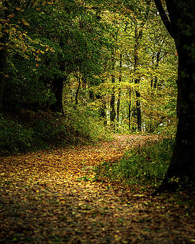 Fall Is Just Around The Corner by Mike Koenig