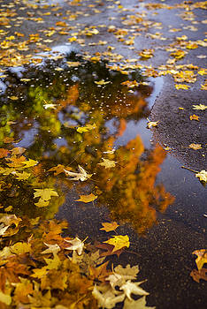 Fall Kind Of Feeling 2 by Michael Donahue