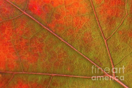 Fall Leaf Jewel by Ana V Ramirez