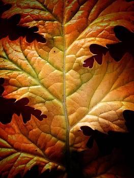 Fall Leaf by Mary McGrath