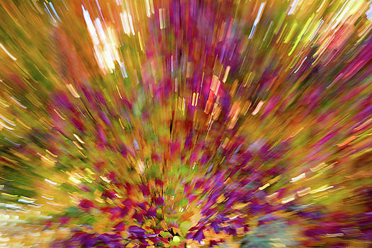 Fall Leaves Abstract 10 by Rebecca Cozart