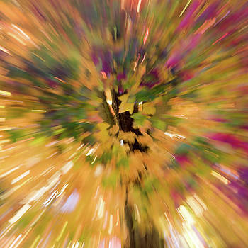 Fall Leaves Abstract 6 by Rebecca Cozart