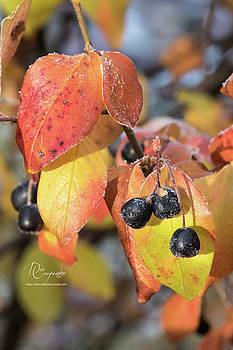 Dee Carpenter - Fall Leaves and Berries