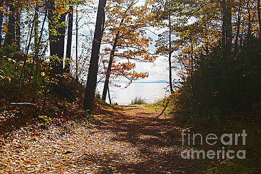 Felipe Adan Lerma - Fall Leaves at Leddy Park Lake Champlain Vermont
