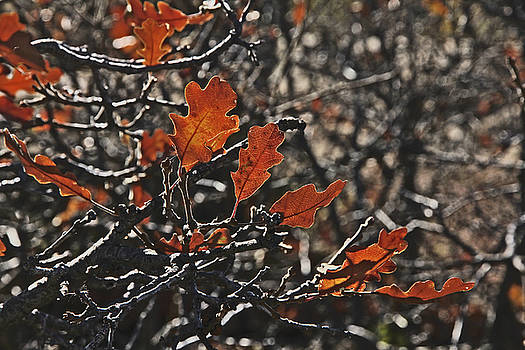 Fall leaves in Colorado Oranges and Browns 2 10272017 by David Frederick
