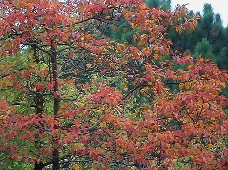 Kathern Welsh - Fall Leaves in Orange