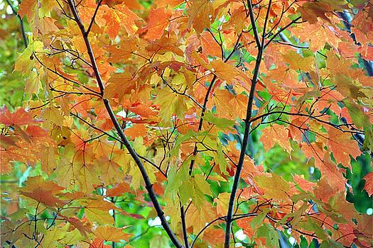 Fall Leaves by Linda Drown