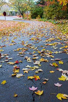 Fall Leaves by Michael Tesar
