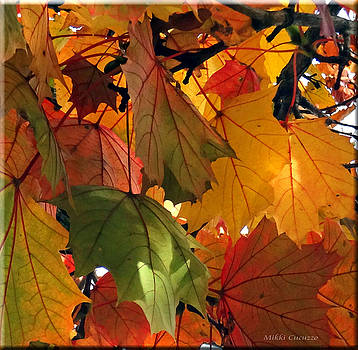 Fall Leaves by Mikki Cucuzzo