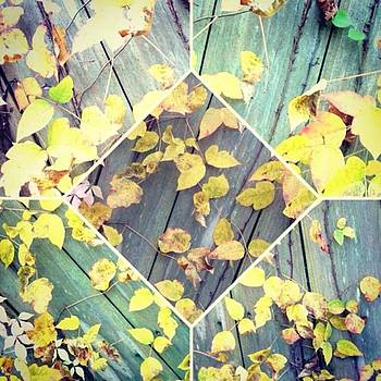 #fall #leaves #nature #beautiful #love by Shyann Lyssyj