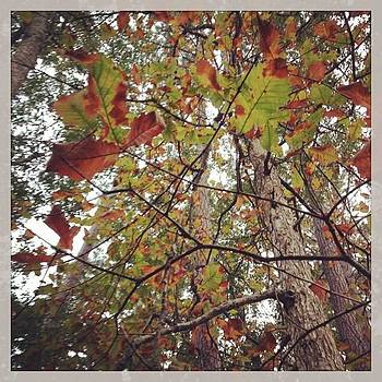 #fall #leaves #nature #sky #clouds by Shyann Lyssyj