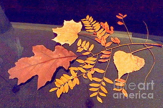 Fall leaves on granite counter by Annie Gibbons