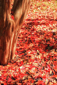 Fall Leaves on the Ground by Jill Lang