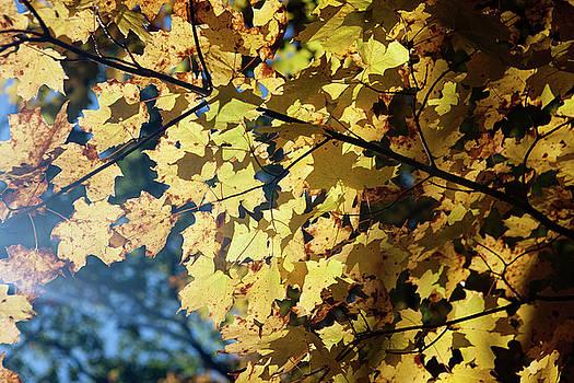 Rich Sirko - Fall Leaves