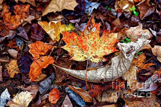 Fall Leaves Two by Paul Mashburn