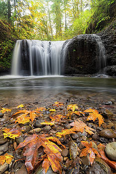Fall Maple Leaves at Hidden Falls by David Gn