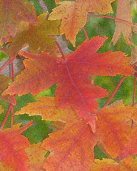 Fall Maple Leaves - Digitally Enhanced by D Winston