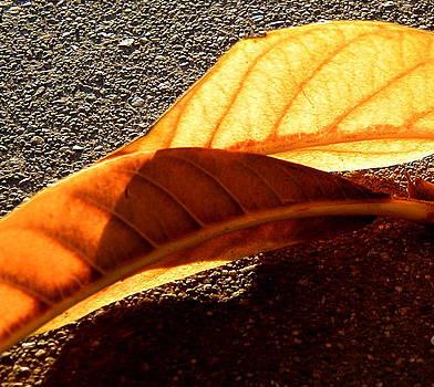 Fall by Mark Stevenson