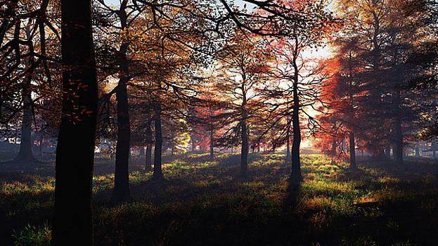 Fall Meadow by Chris Bird