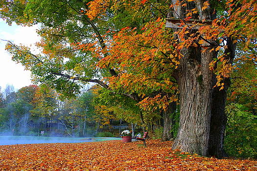 Fall Morning in Jackson by Suzanne DeGeorge