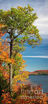 Fall oak tree by Elena Elisseeva