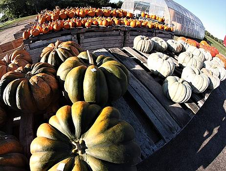 Fall offerings by Gerald Salamone