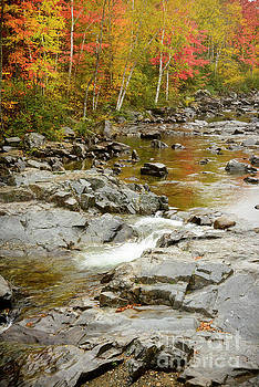 Fall on the Carrabassett River by Alana Ranney