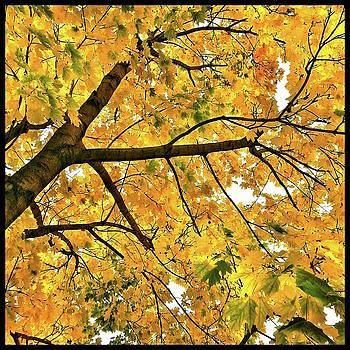 Fall on William Street by Al Harden