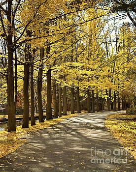 Fall Path Landscape Photo by Melissa Fague